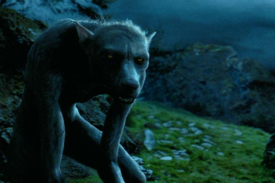 harry potter loup^-garou