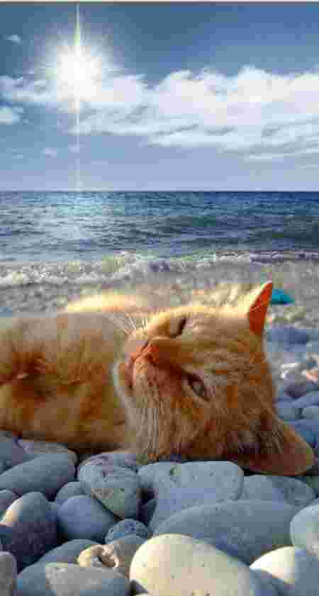 chat divers  C7c2713fb7decb886a6f3cd376727bfebeafecc2-chats-plage-vacances-image16-thumb